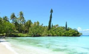Photographie d'une plage avec la forêt au fond