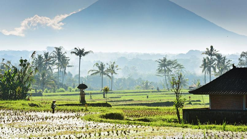 Au pied de la montagne sacrée (le volcan Batur), les rizières, nimbées de lumière, prennent mille et une nuances de vert.