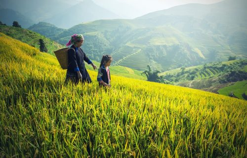 Balinaises marchant dans les rizières